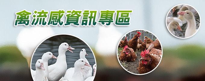 連結:禽流感資訊專區(另開新視窗)